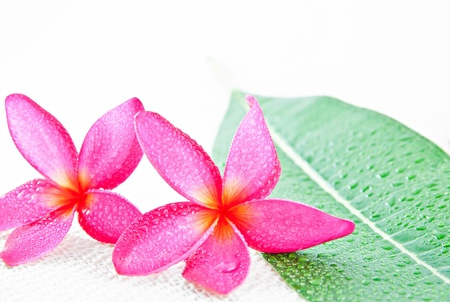 Lan thom flower on white background photo