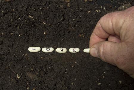 siembra: Sembrando las semillas del amor en la rica tierra de jardín. Foto de archivo
