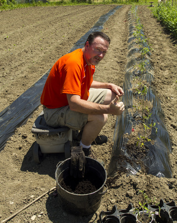 fertilize: A happy organic farmer happy after planting a row of tomato plants Stock Photo