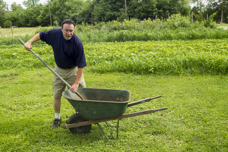 Organic farmer mixing compost in a wheel barrow.