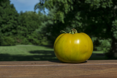 heirloom: Yellow heirloom tomato on railing.