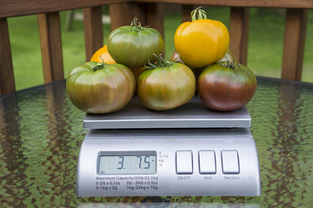 fruit market: Variety of tomatoes on produce scale.