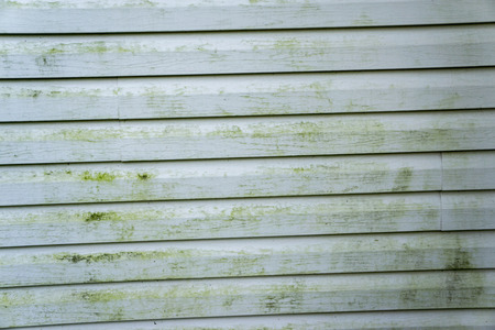 Alage and mold on a house with vinyl siding.