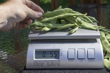 Farmer weighing green beans for a customer.