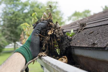 hojas antiguas: Canalones de limpieza durante el verano.