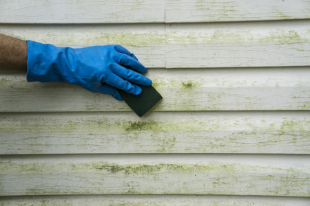 Scrubbing algae and mold off a house with vinyl siding.