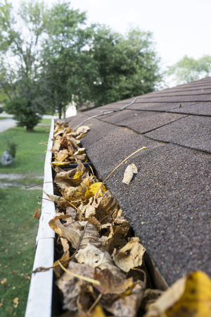 Dry leaves in a gutter ready to be cleaned out.