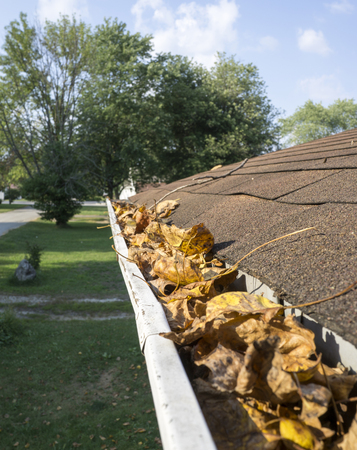gutter: Leaves in gutter and ready to be cleaned out.