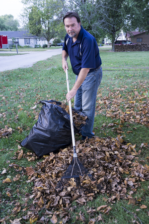 Worker rsking leaves into a large pile brfore putting them in a trash bag. Standard-Bild