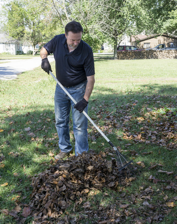 raking: Worker raking leaves in a small pile in the front yard of a house. Stock Photo