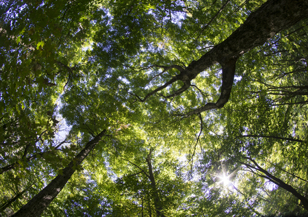 fish eye lens: Late summer tree canopy shot with a fish eye lens.