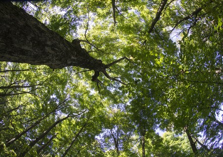 fish eye lens: Summer tree canopy shot with a fish eye lens. Stock Photo