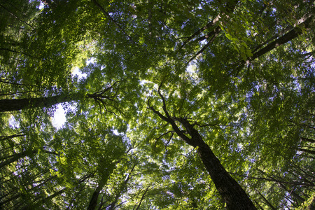 fish eye lens: Forest canopy shot with fish eye lens.