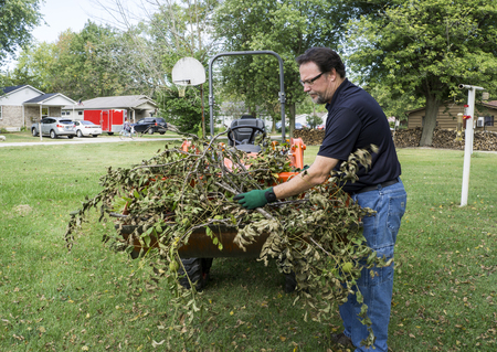 front loader: Tree trimmer loading limbs into a small tractor front end loader.
