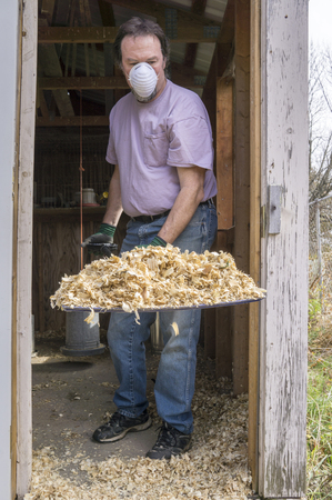 coop: Chicken farmer removing soiled shavings to reduce Avian Flu and other diseases. Stock Photo