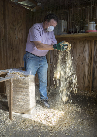 slaughtering: Chicken farmer putting new shavings down to try and prevent Avian Flu and other diseases. Stock Photo