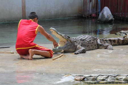 Crocodile Show photo
