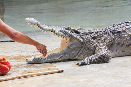 Crocodile Show photo