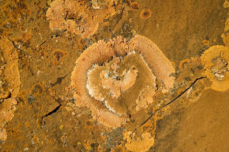 Orange lichen growing on rock.