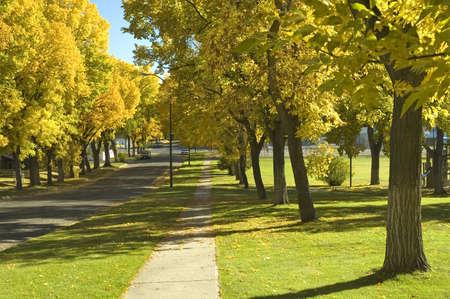road autumnal: Elm trees in Autumn.