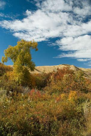 cirrus: Blue sky over fall bushes. Stock Photo