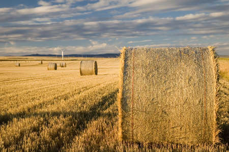 hayroll: Bales of hay or straw. Stock Photo