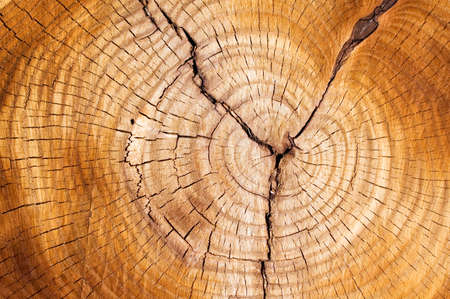 Boom ringen in een cut down boom. Stockfoto