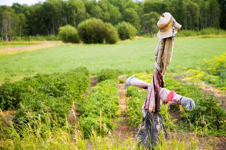Scarecrow in a farmers field
