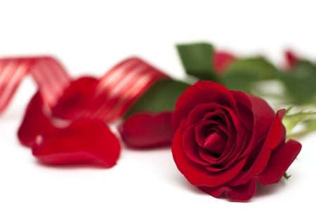 Red rose with ribbon on white background
