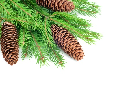 Christmas fir with cones isolated on white