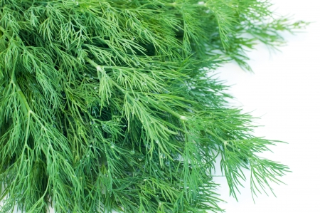 Bunch of fresh wet dill isolated on white