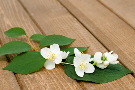 Branch of jasmine on a wooden table, horizontal Stock Photo