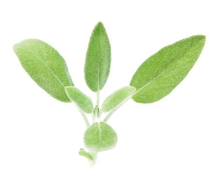Fresh organic sage isolated on white, selective focus Stock Photo