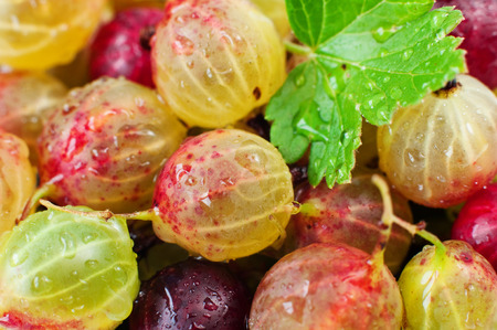 Delicious gooseberry, selective focus, horizontal