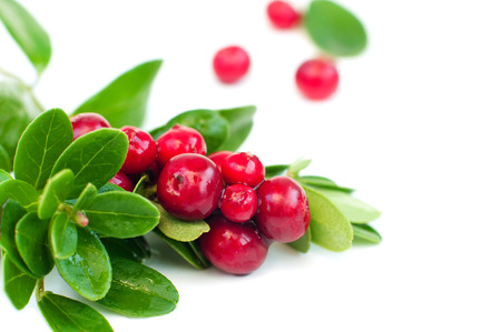 cowberry: Macro of cowberry isolated on white background, horizontal