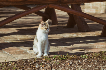 Photo of beautiful stray cat sitting outdoor.Image is intentionally toned.