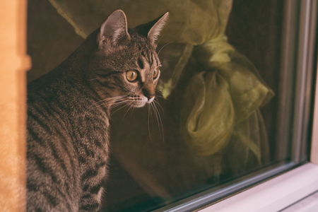 Beautiful cat looking through window.Image is intentionally toned.