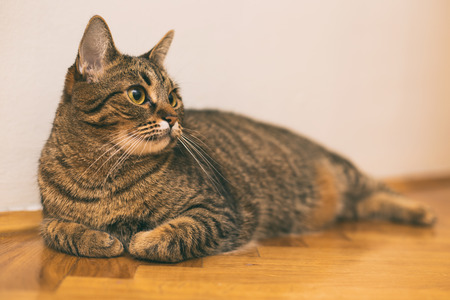 Beautiful cat resting on the floor at home. Stok Fotoğraf