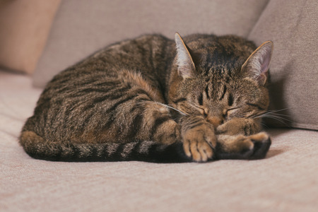 Cute cat enjoys sleeping on sofa.Toned photo Banco de Imagens - 124884834