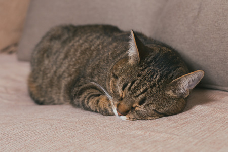 Cute cat enjoys sleeping on sofa.Toned photo Banco de Imagens - 124884842