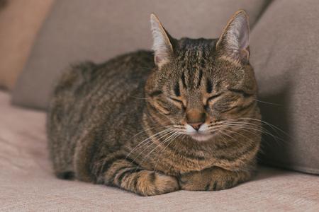 Cute cat enjoys sleeping on sofa.Toned photo