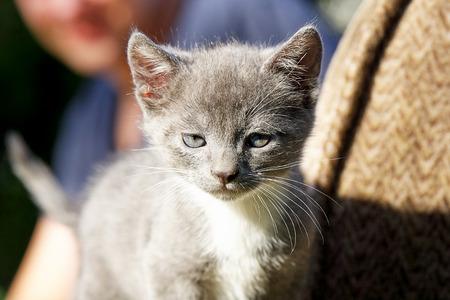 Little gray-haired kitten surprised on the sofa
