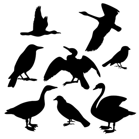 Collection of birds. Vector illustration Vector