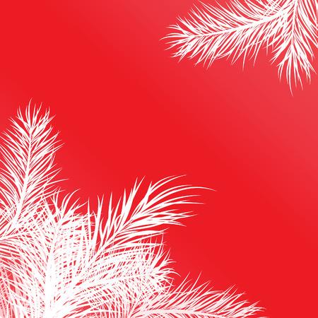 Quadro da rami di pino bianco. Vector illustration