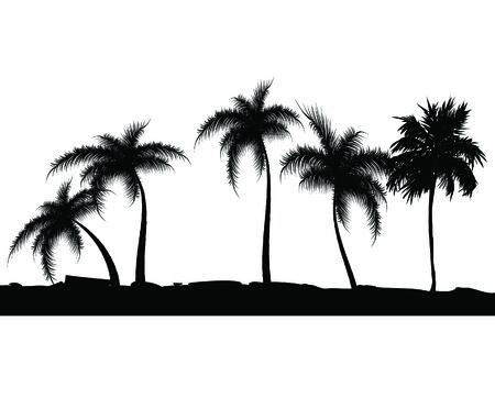overseas: Verano con palmeras de fondo. Ilustraci�n vectorial Vectores