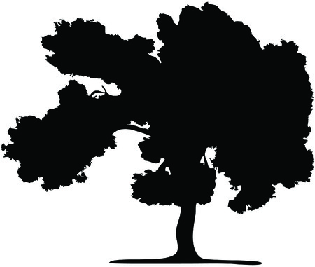 The silhouette of a tree isolated on a white background Vector