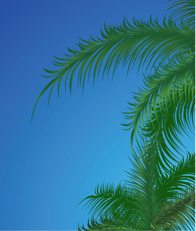 Summer background with palm trees. Vector illustration Vector