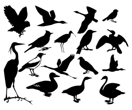 Collection of silhouettes of birds. Vector illustration Vector