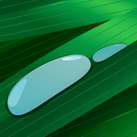 Water drops on green leaves. Vector illustration Vector
