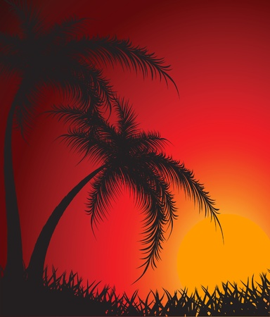Silhouettes of palm trees against a decline Vector